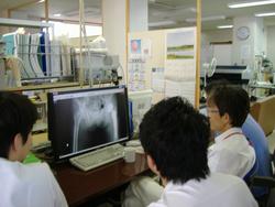 整形外科プログラム